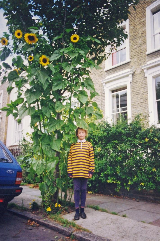 Sunflower 1aa.jpg