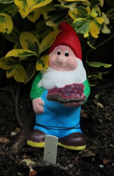 gnome7.JPG